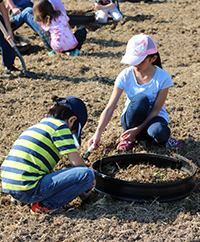 planting pumpkin seeds